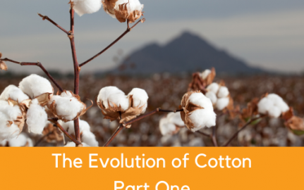 The Evolution of Cotton, Part One
